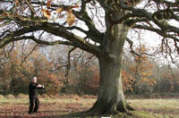 standing qigong under oak tree